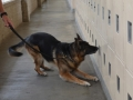 Impact-Canine-Solutions-313